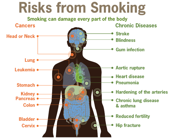 597px-Risks_form_smoking-smoking_can_damage_every_part_of_the_body